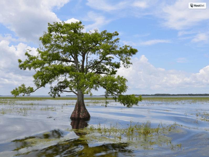 'Gators at Boggy Creek, Everglades – Hey Y'all #10