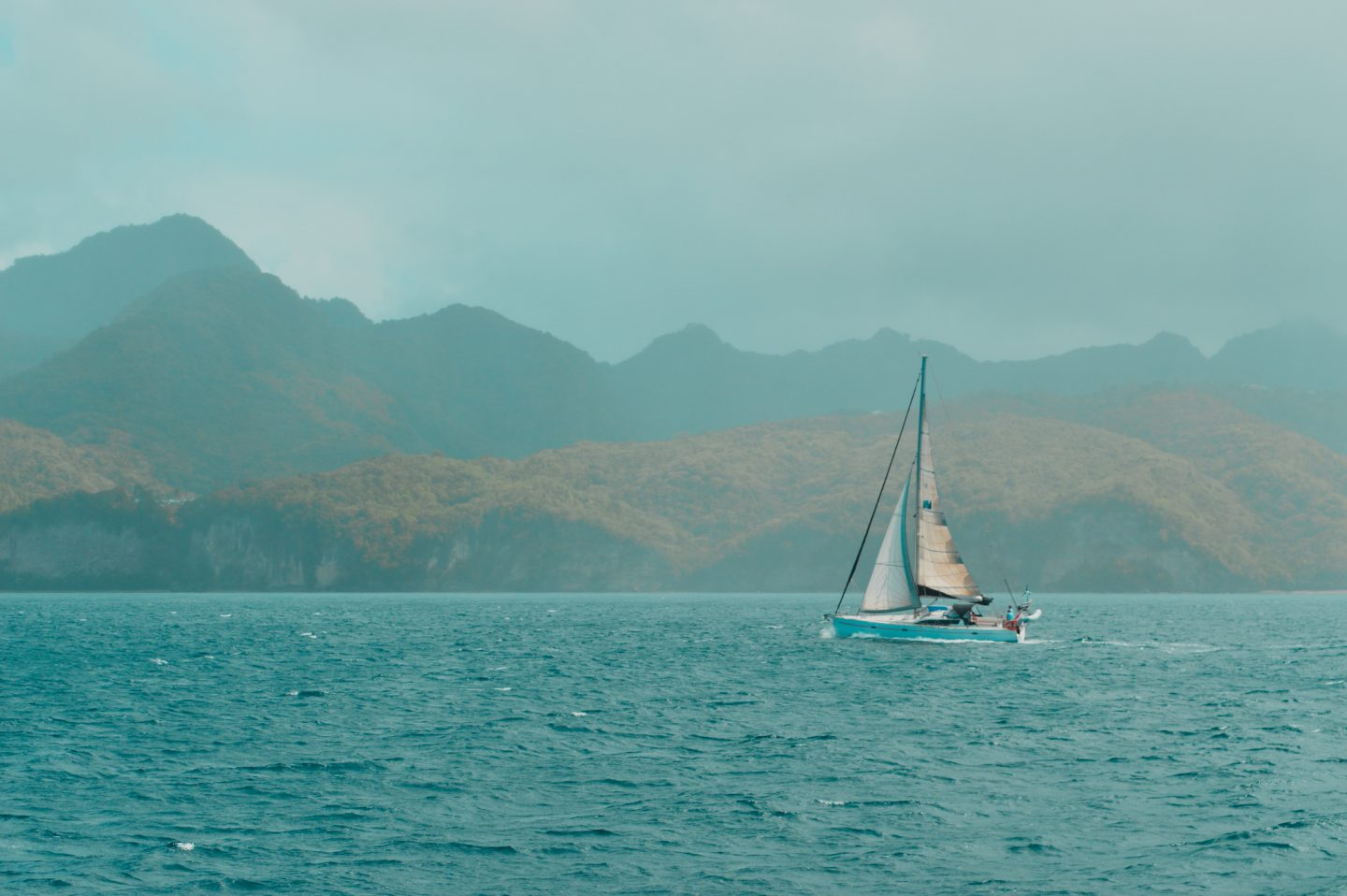 Whale watching in Saint Lucia